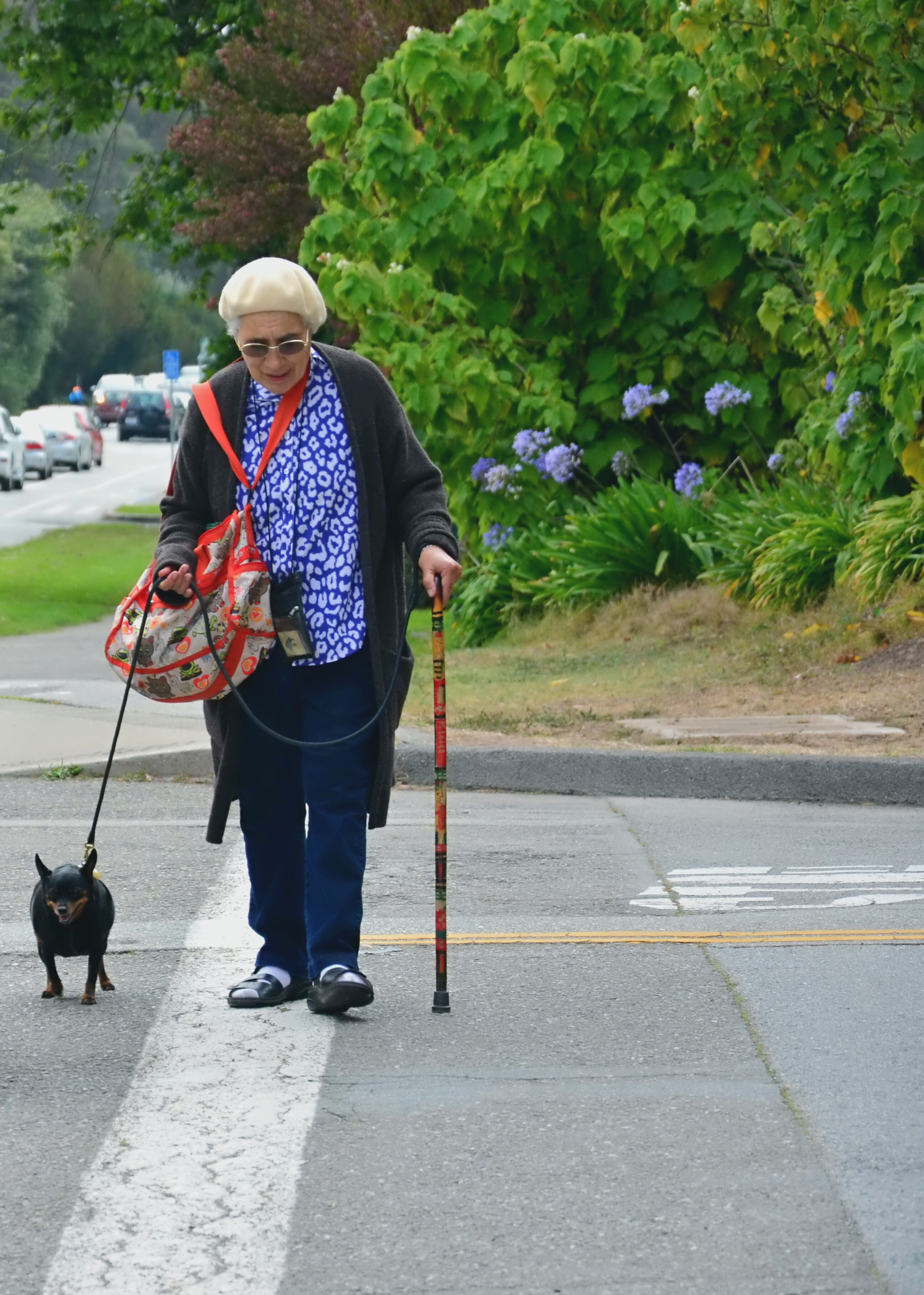 elderly-woman-walking-on-crosswalk-with-cane-and-her-dog